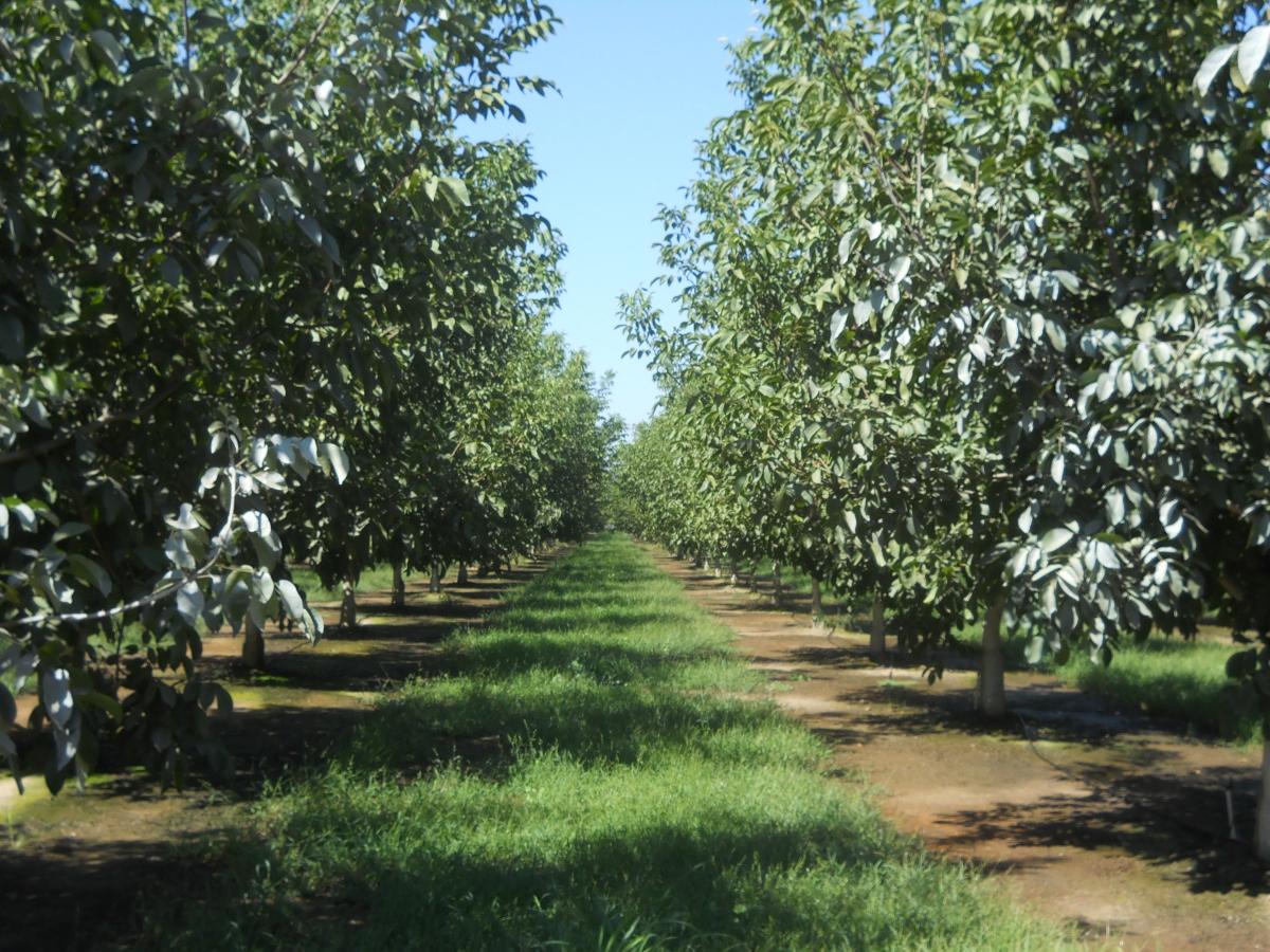 walnutorchard